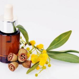 Tinh dầu khuynh diệp nguyên chất